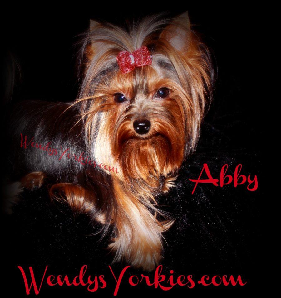 Abby Gail