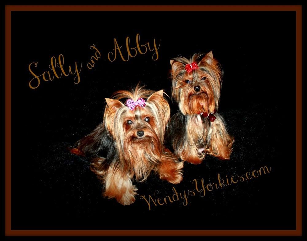 2 female yorkie dogs.