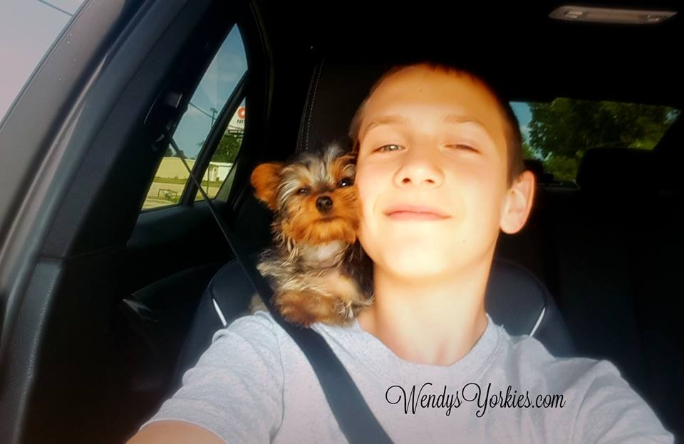 Things Only Yorkie Owners Understand