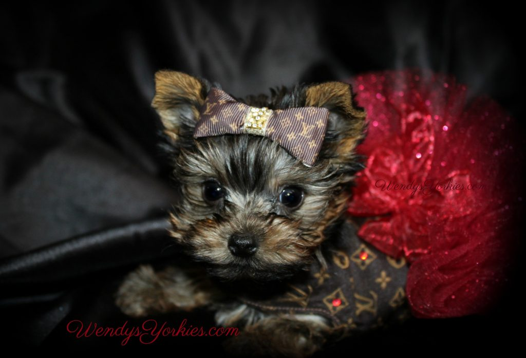 Custom Dresses for Female Yorkie Puppies